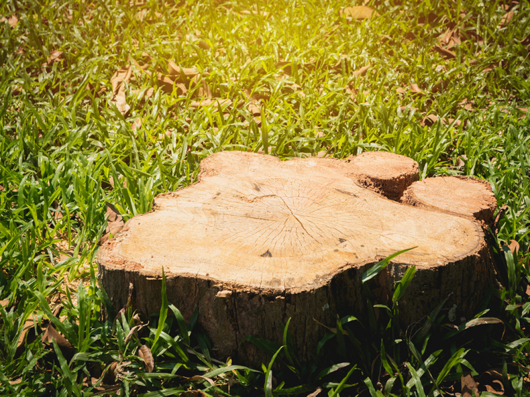 Say Goodbye to Your Stump Problem