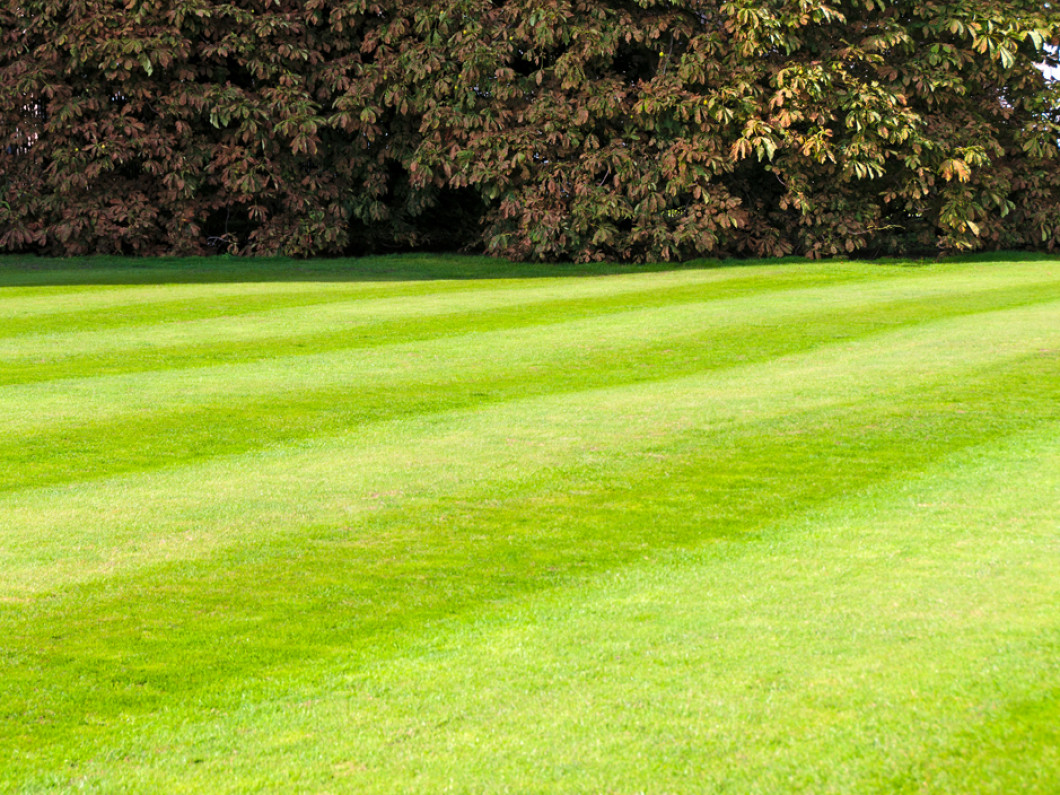 Reliable Lawn Maintenance & Lawn Care in Leesburg, VA